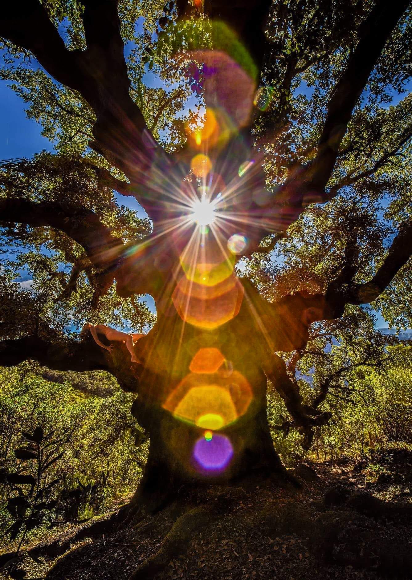 Herääminen kevääseen – kohti iloa ja valoa -työpaja 28.3. klo 11.00-16.30 (SIIRTYY)
